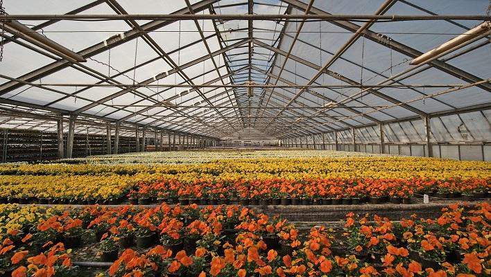 Curso de jardinería y horticultura