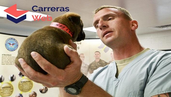 Curso de auxiliar veterinario