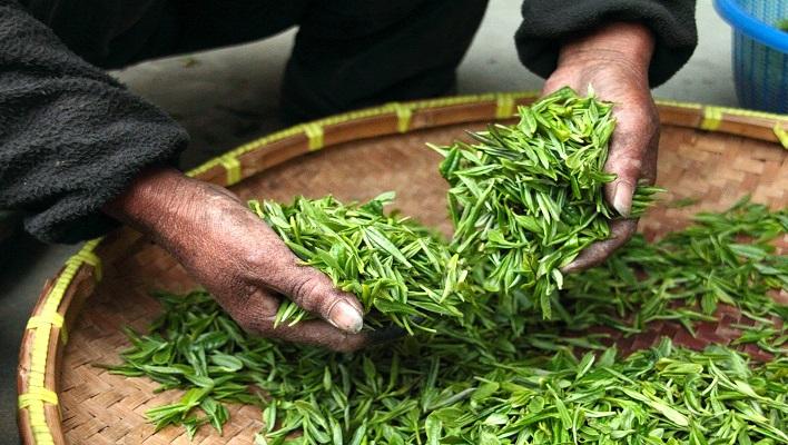 Curso recolección de productos agrícolas