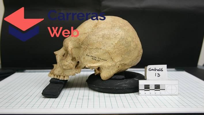 Curso de antropología